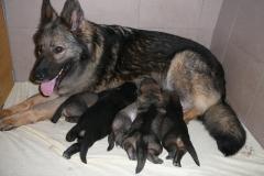 cora-pupies
